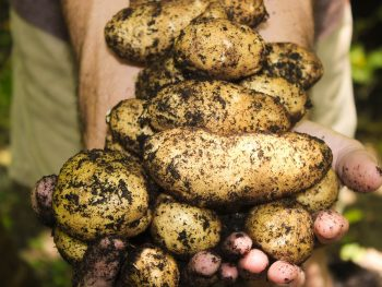 Home-grown Potatoes That Taste Amazing and 2 Potato Recipes