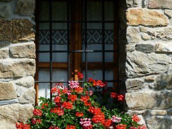 How to Grow Geraniums Easily – Best Pest Control