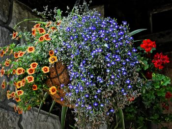 5 Best Flowers for Hanging Baskets