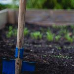 What To Do For June Gardening