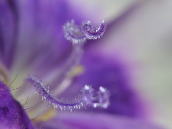 Structure and Parts of a Flower (Part 3 of 11)