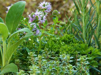 How to design a herb garden?
