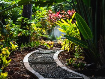 Understand and Adjust Microclimates in Your Garden