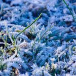 What Are The First And Last Frost Dates?