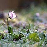 Essential Gardening Tasks Before Springtime