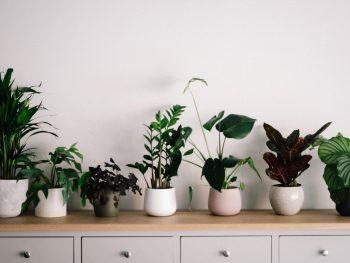 How To Prevent Over-watering Indoor Plants